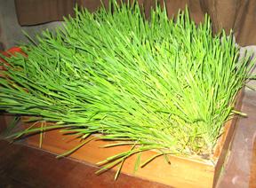 cat-grass.jpg