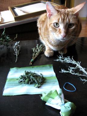 denzel-loves-catnip.jpg