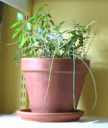 indoor-herbs.jpg
