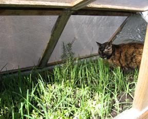 nim-in-greenhouse.jpg