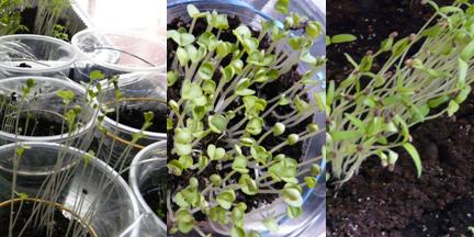 seed_starting2