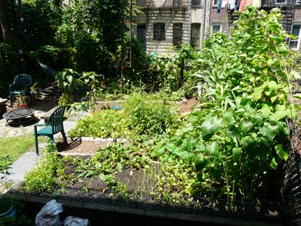 garden_july